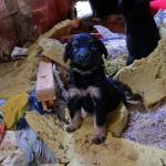 pies-stojkowo-2_lipiec-2012