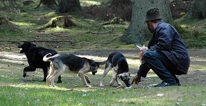 psy - wyrzucone w lesie - 2009