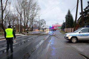 foto SG - niebezpiecznie złamane drzewo we Wrzosowie